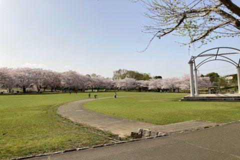 絹の台桜公園の芝生広場