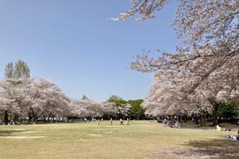立沢公園の芝生広場