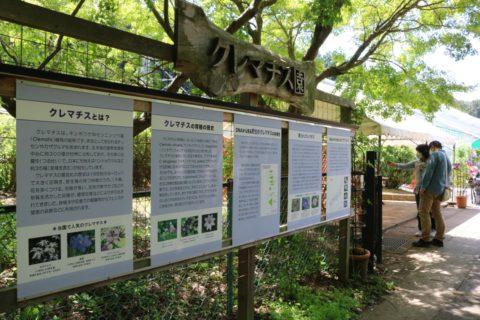 筑波実験植物園「クレマチス園」