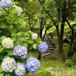 梅雨の晴れ間に~筑波山のアジサイでリフレッシュ♪~