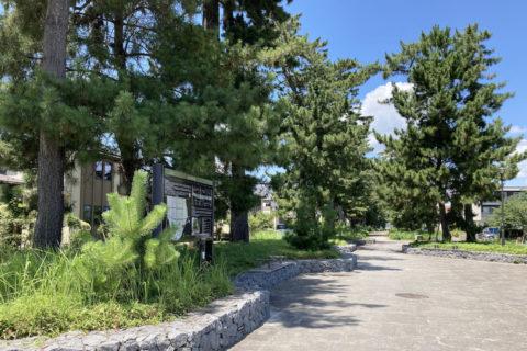 く緑の道には木陰があり、ベンチもあり、散歩にもぴったり
