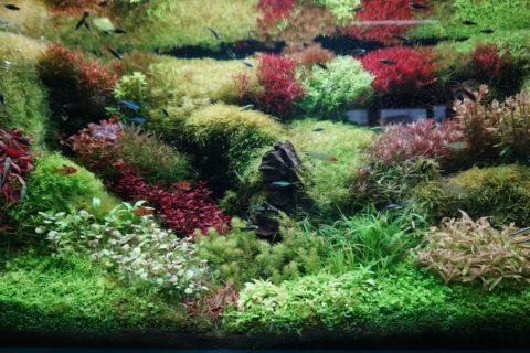 筑波実験植物園「水草展」