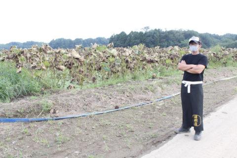 守谷市でレンコン栽培を営む中村さん